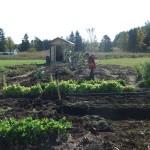 jardinage-des-enfants2