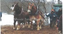 Tire de chevaux double sur des blocs